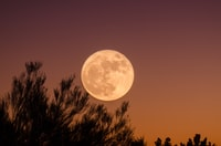 Full moon and branches