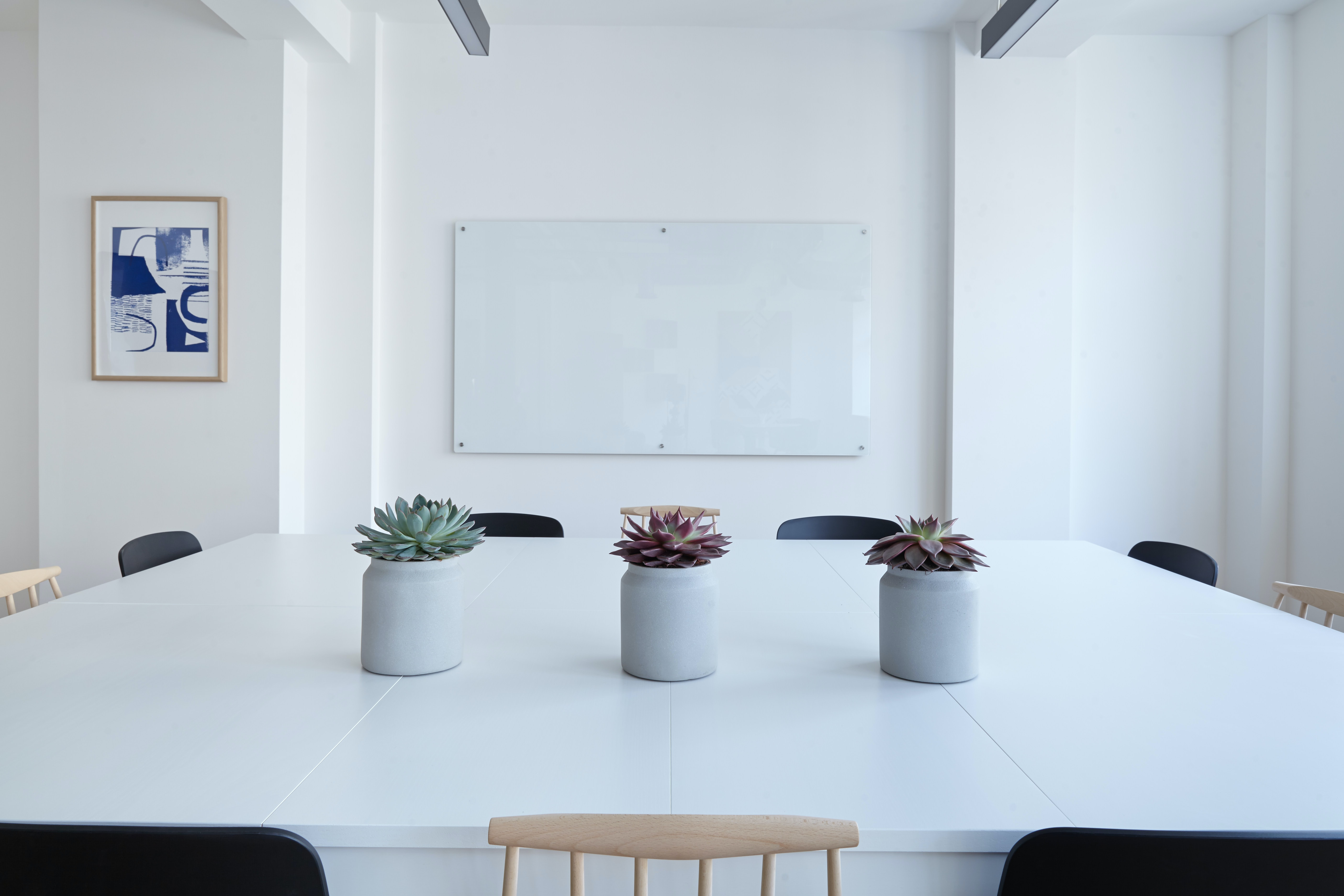 Three potted succulents on a large white table in a conference room