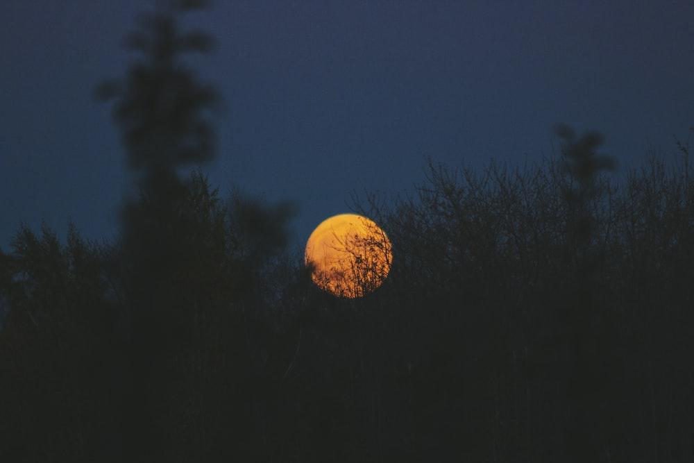 green plants under full moon