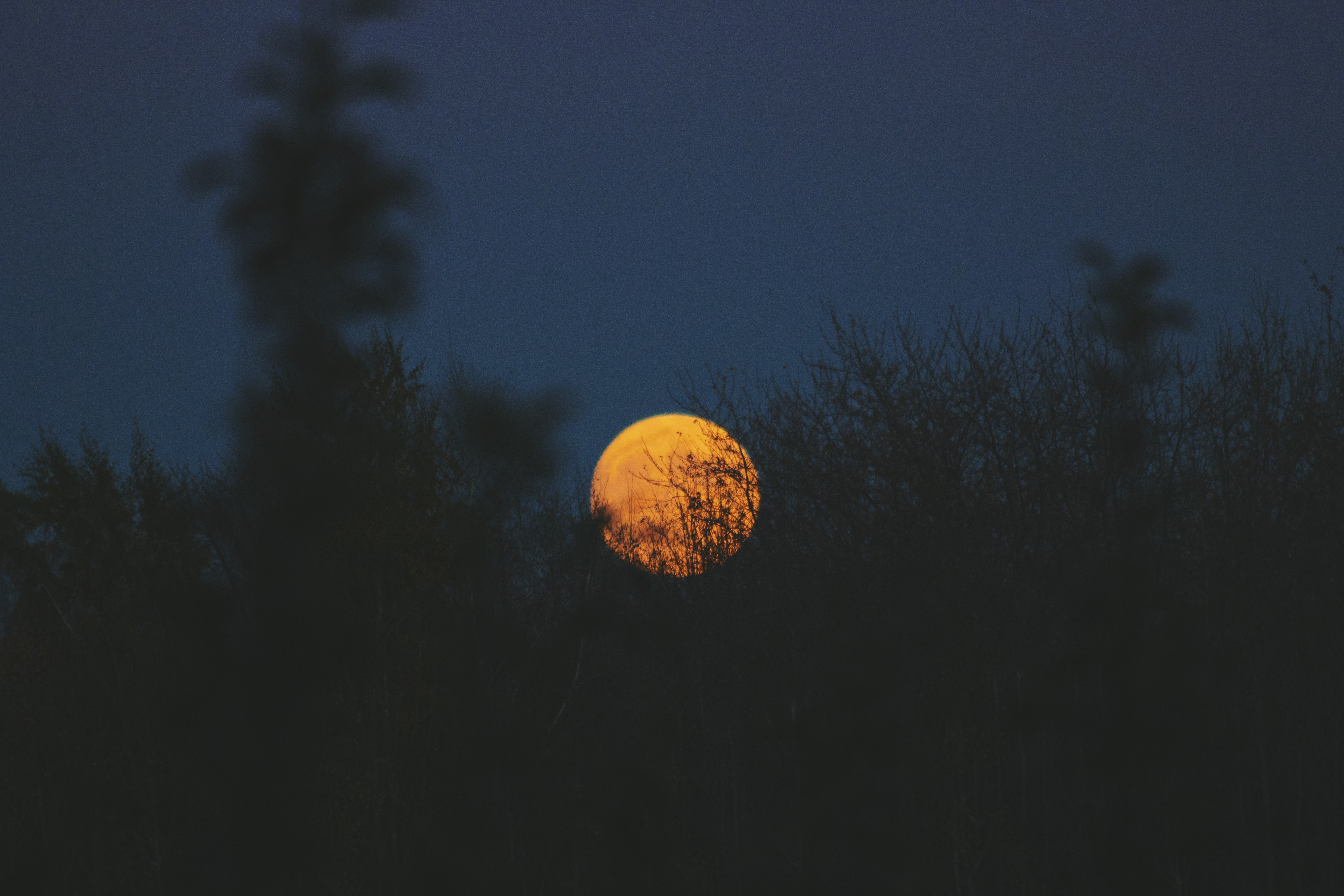 Silhouette trees lightly obscure the orange moon in a gray night sky