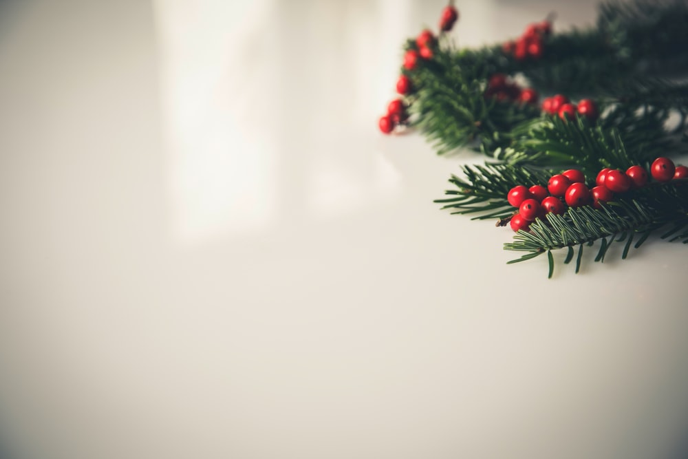closeup photography of green Christmas tree leaf