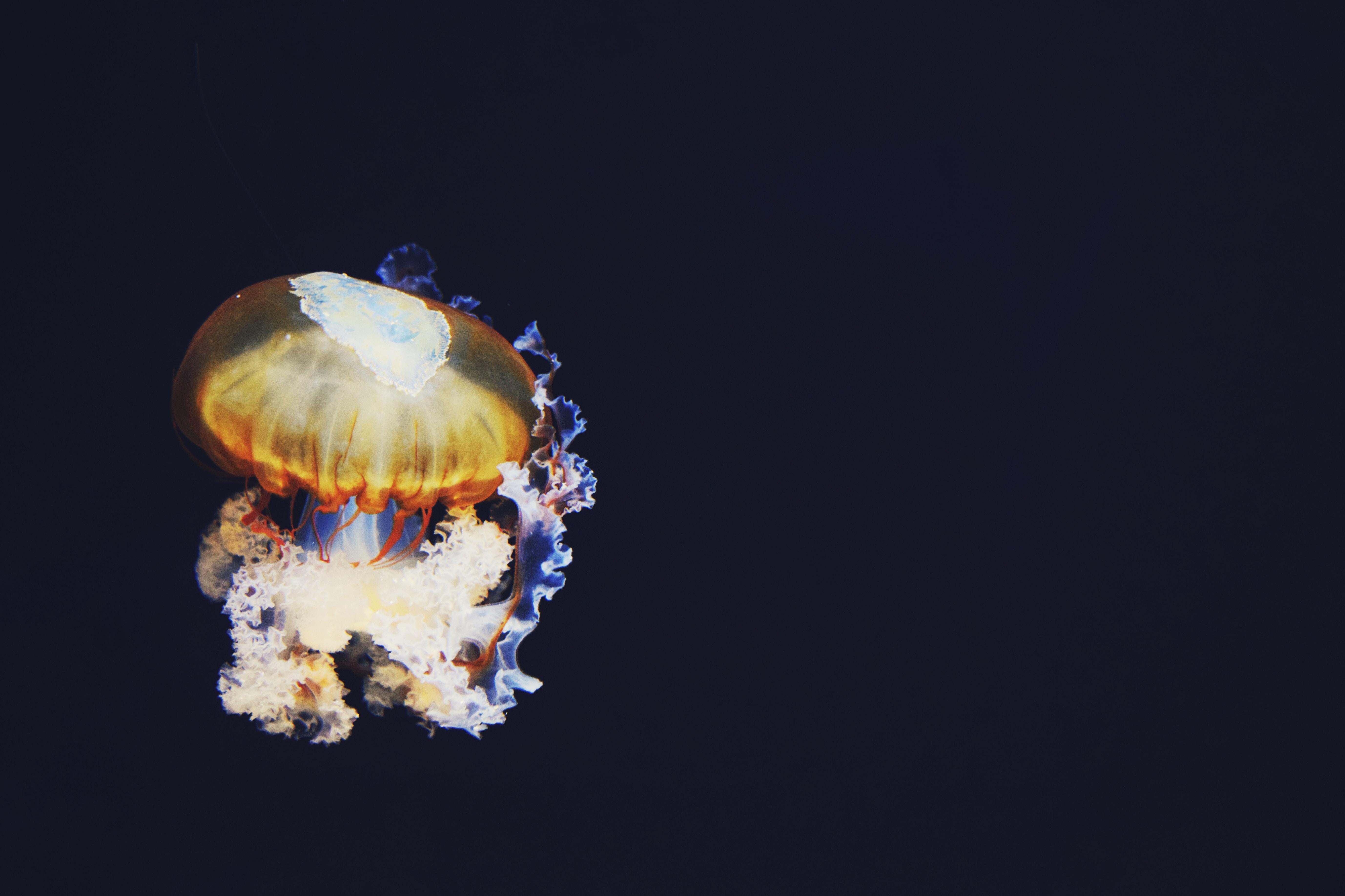 closeup photo of jellyfish