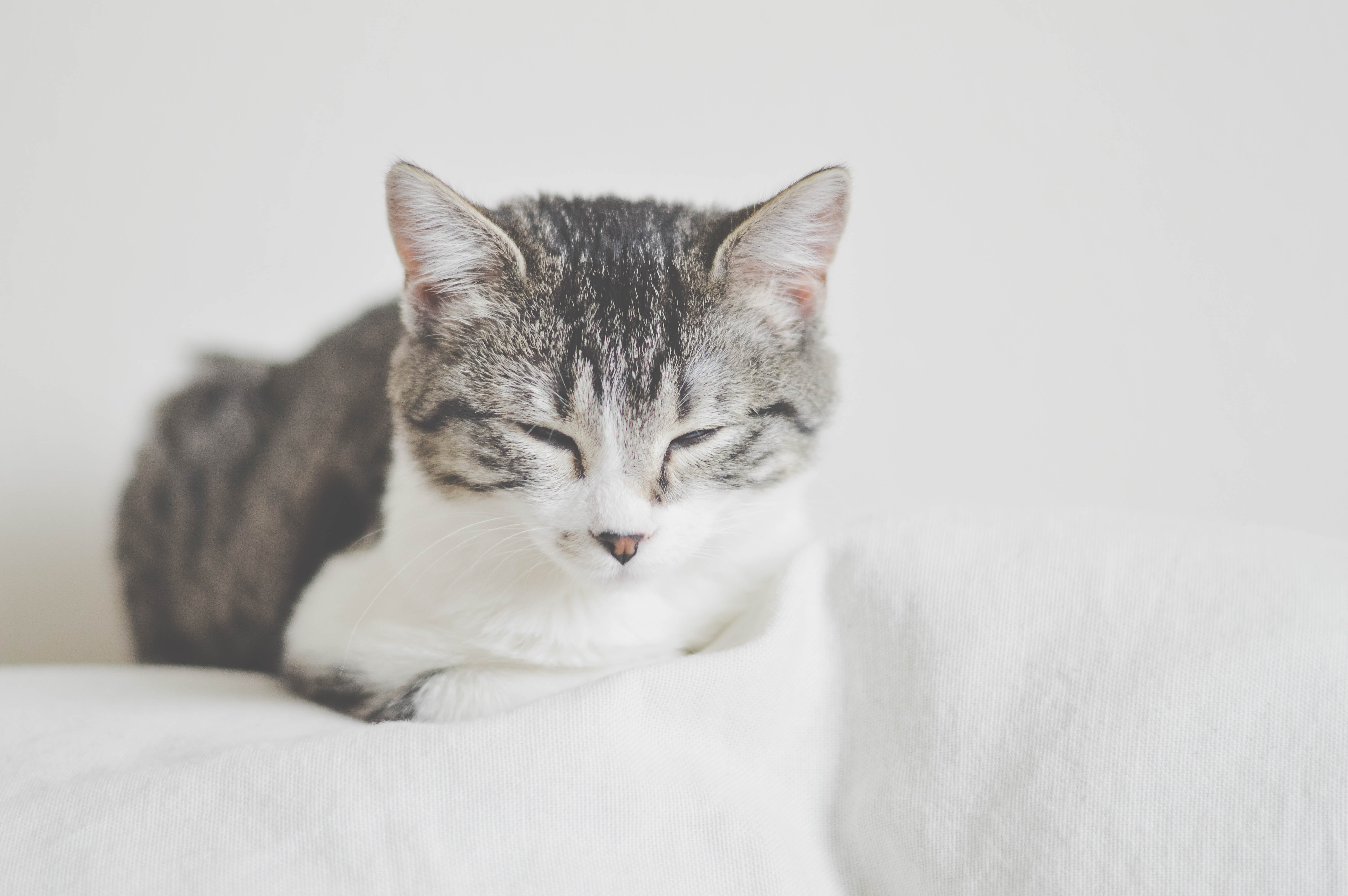 A tabby cat dozing off on top of a white sofa