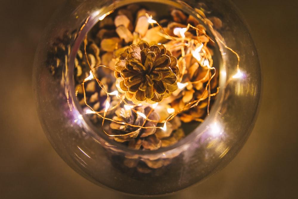selective focus photo of pine cones