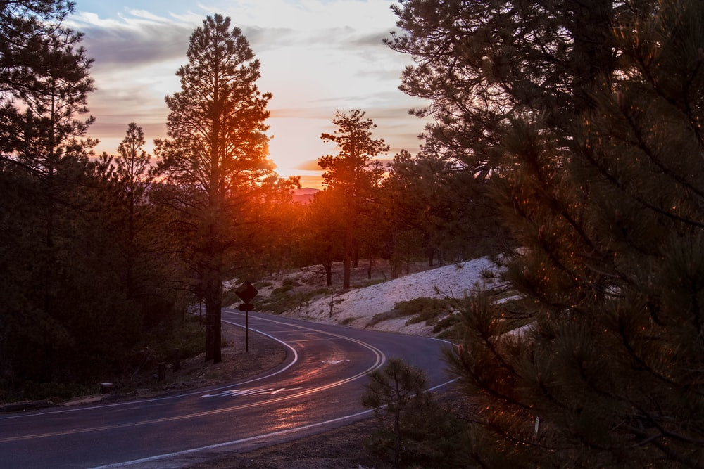 road in middle of trees during sun set