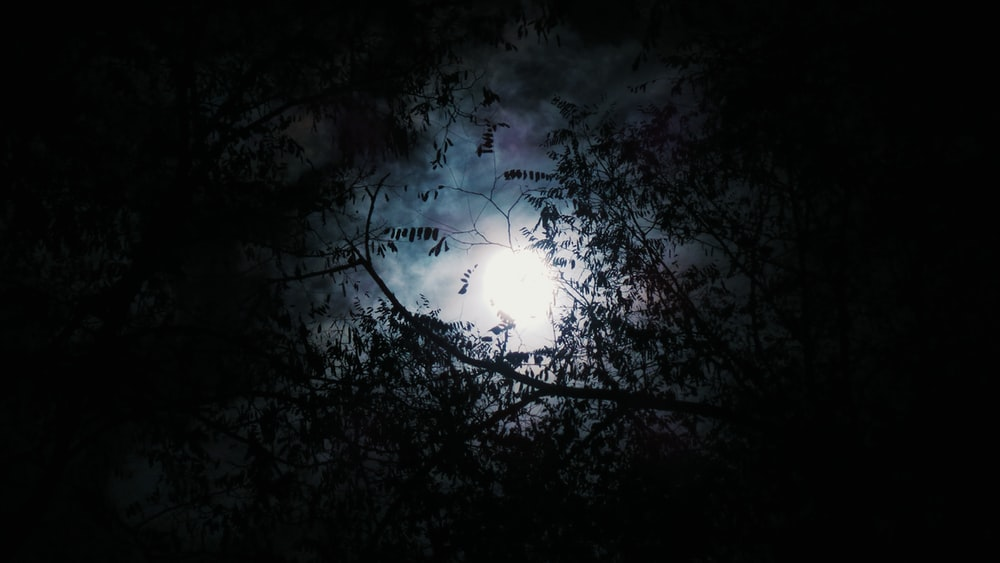silhouette of tree with full moon background