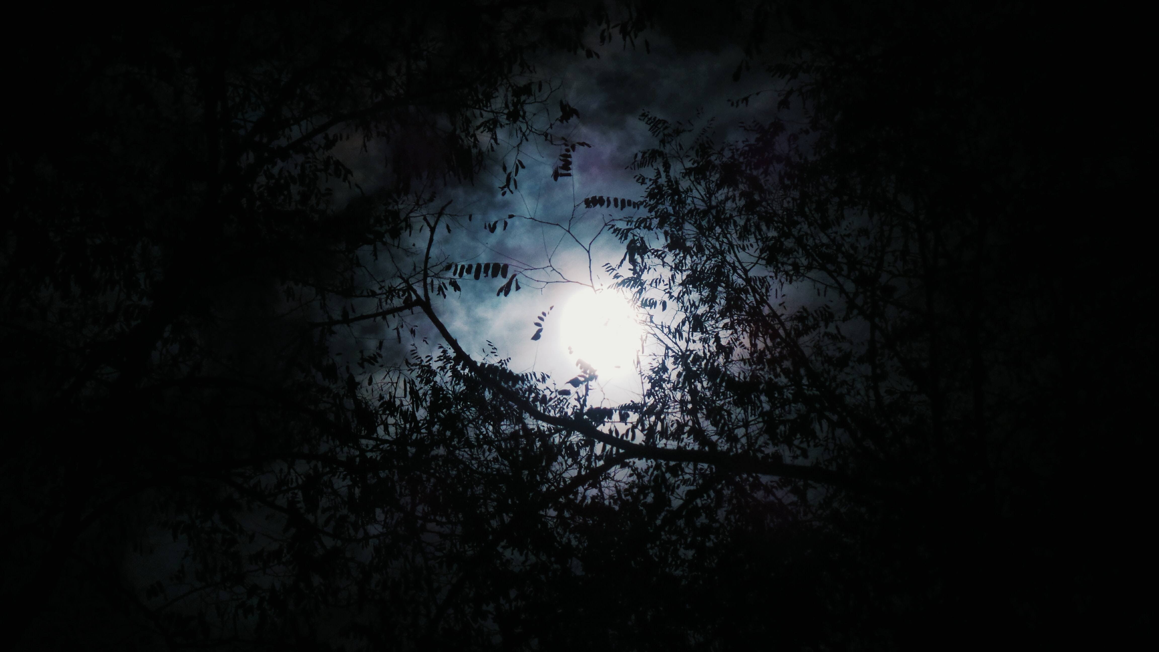 Looking up to the moon on the sky as seen through silhouetted leafy branches