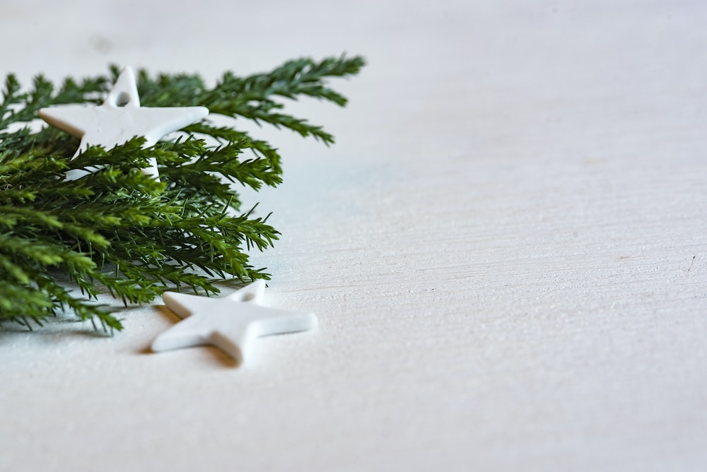 green plant on white surface
