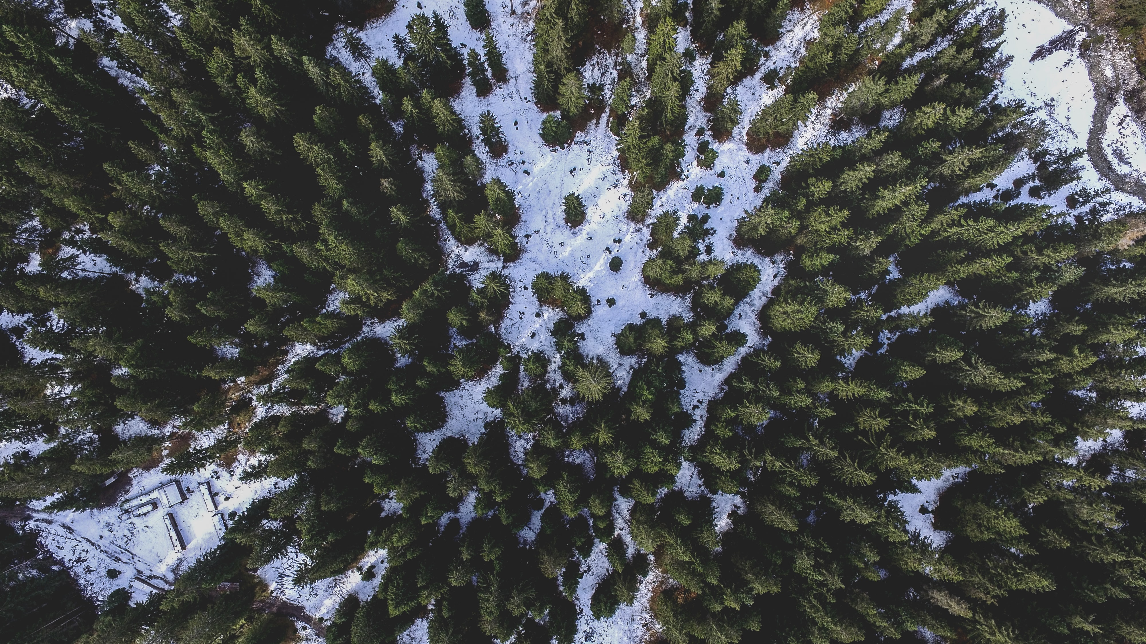 A drone shot of a coniferous forest in Leutasch in winter
