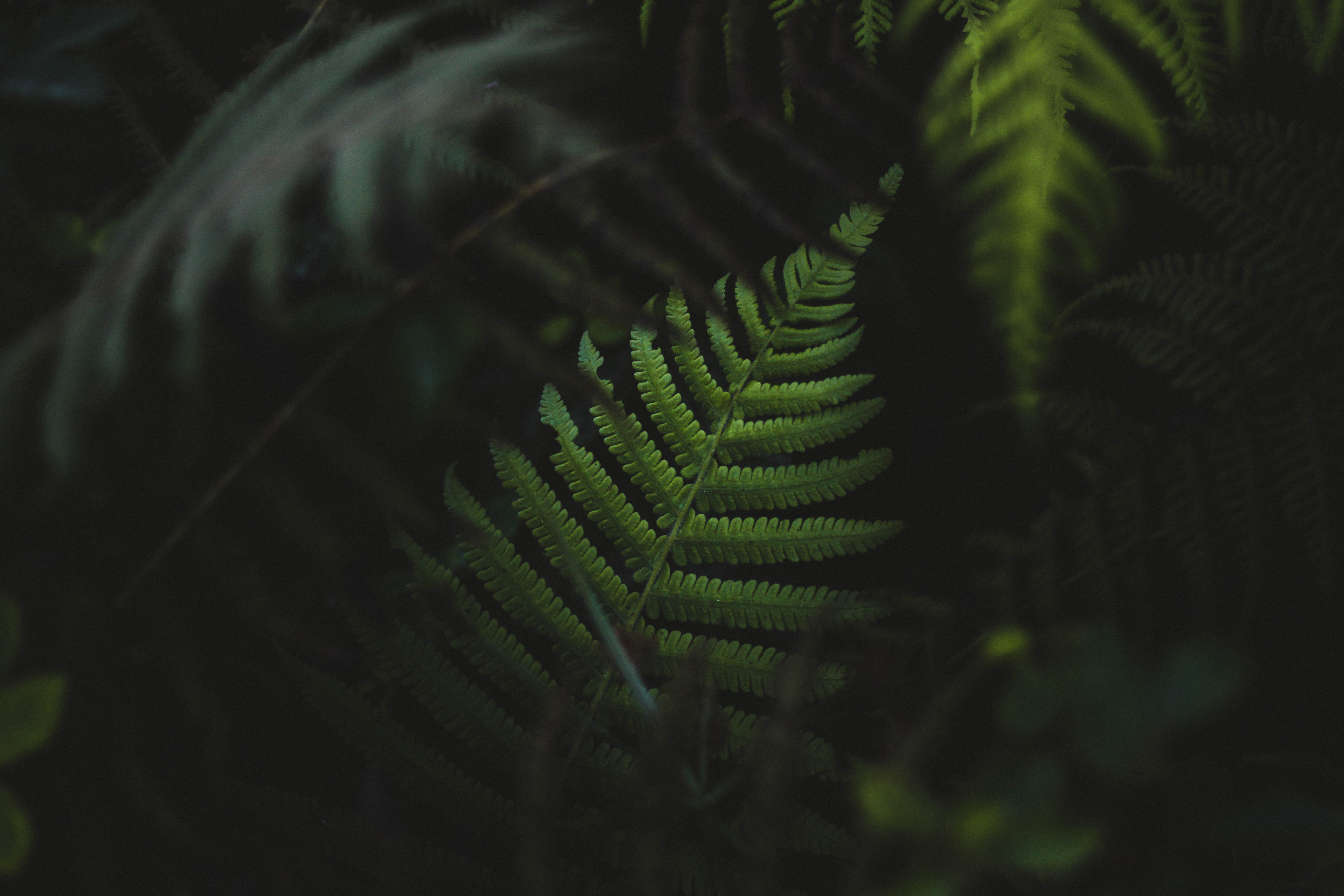 selective focus photography of green Boston fern