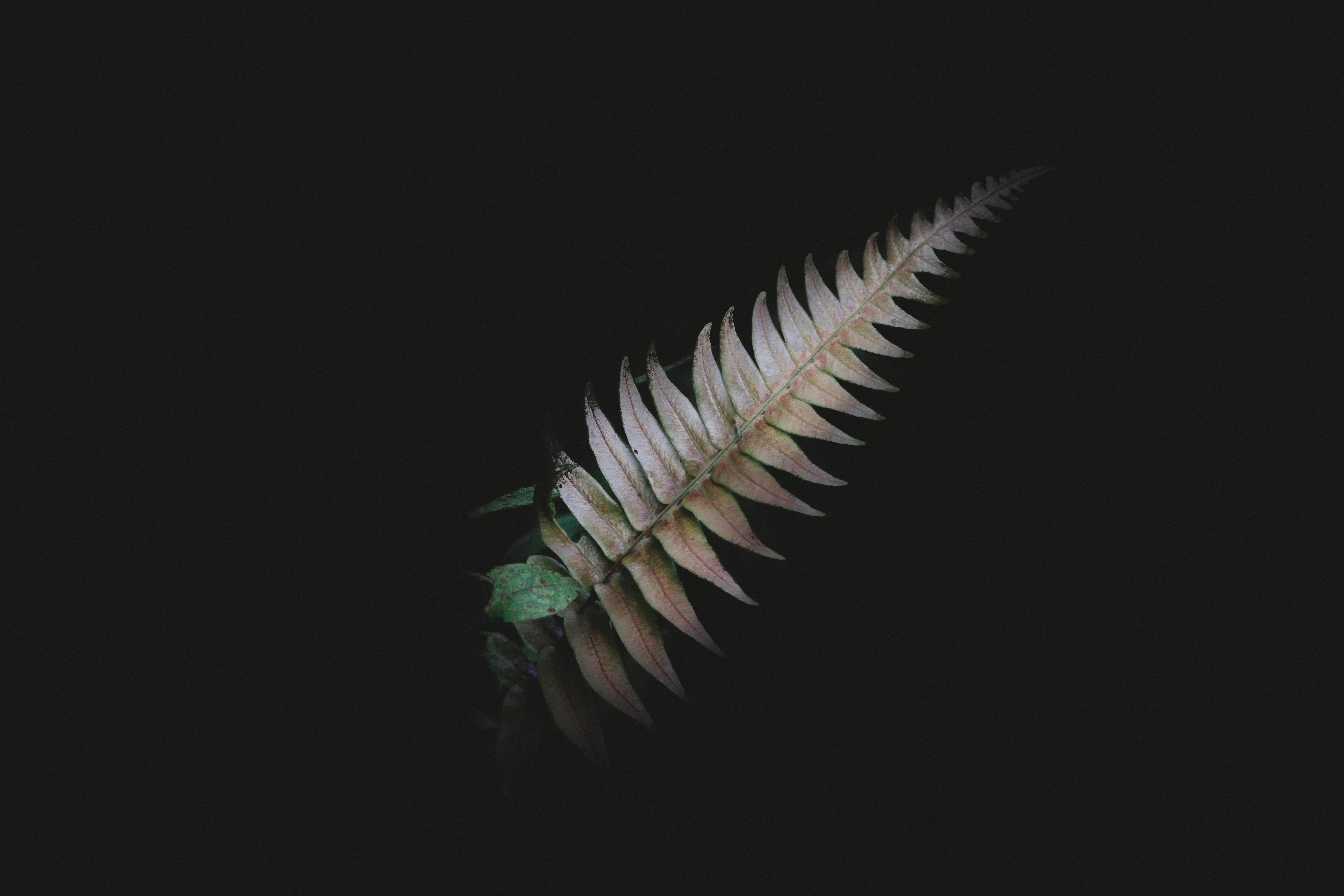 A dark night shot highlighting the foliage of a leaf