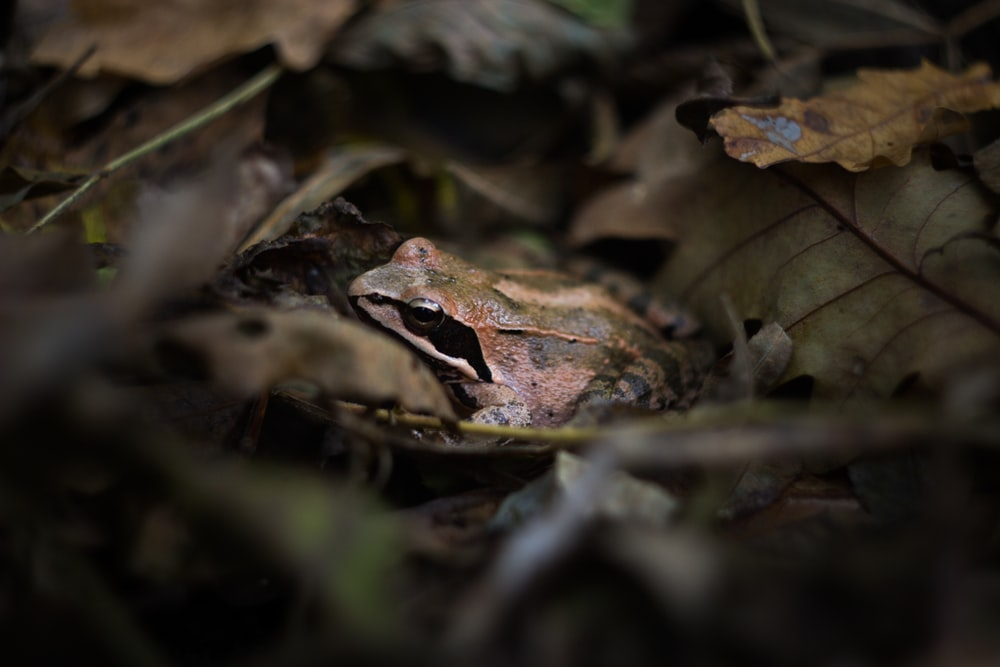 selective focus photo of frog