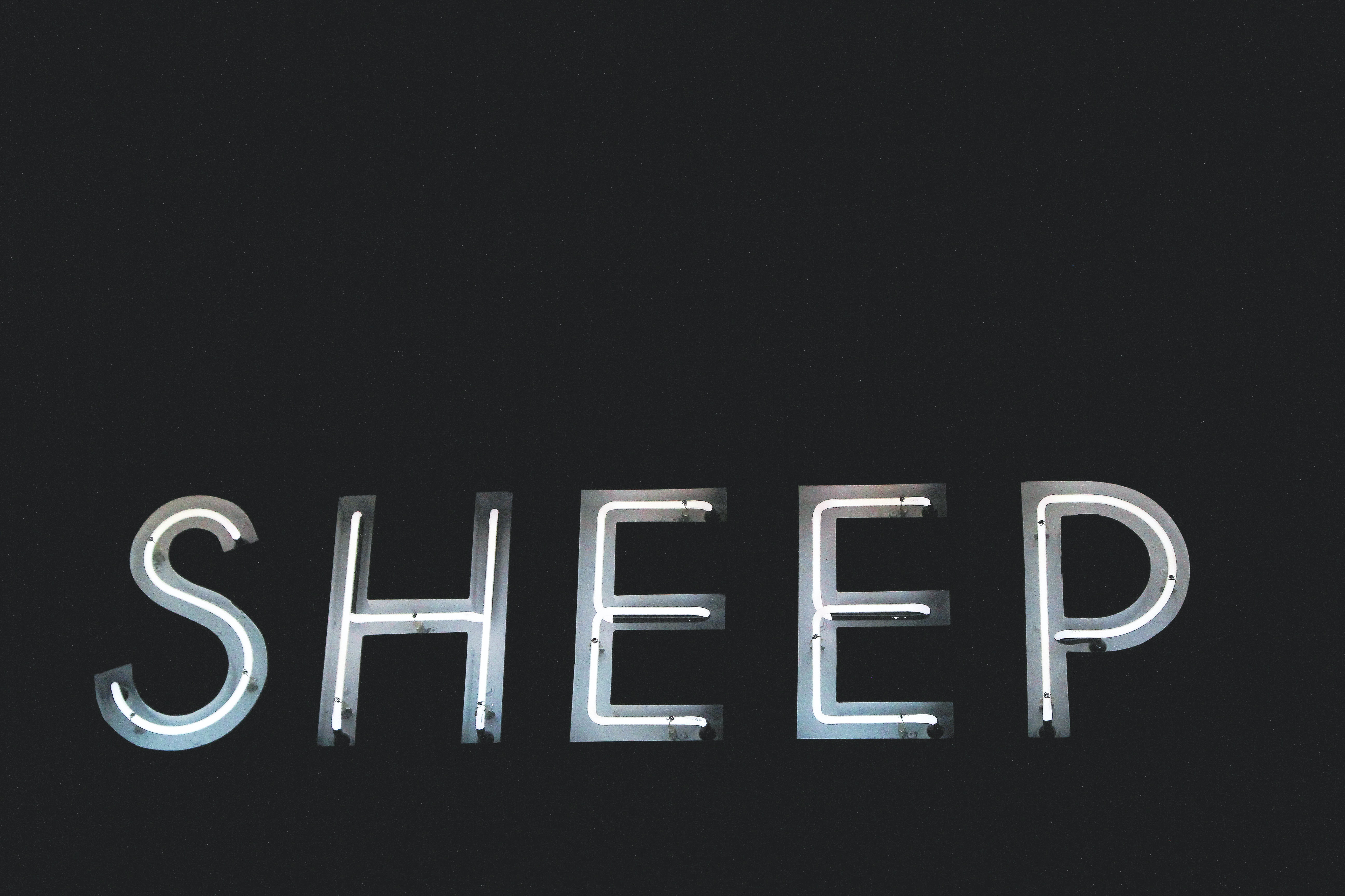 "A white neon sign at the Black Sheep Burgers and Shakes that reads ""SHEEP""."