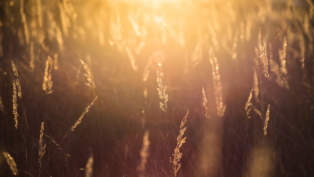 photography of grass with sun light