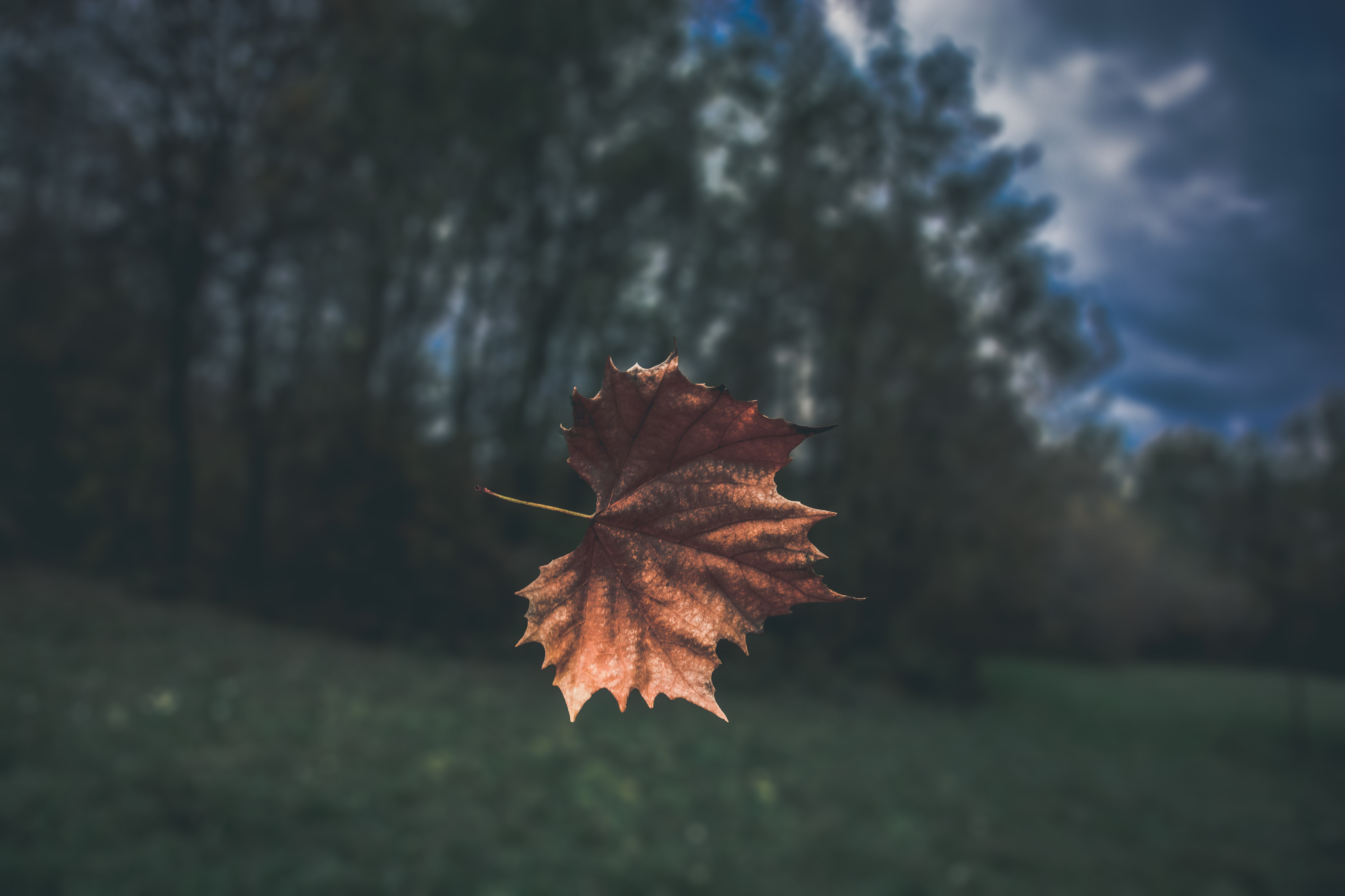 A brown autumn leaf suspended in the air