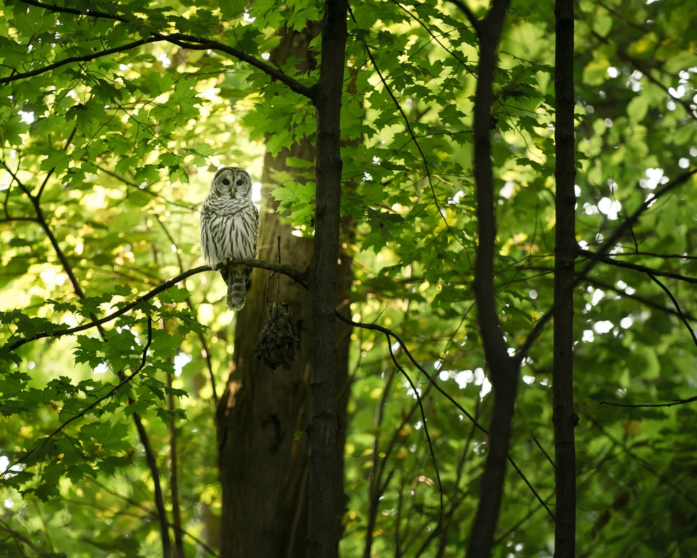 white and grey owl on tree