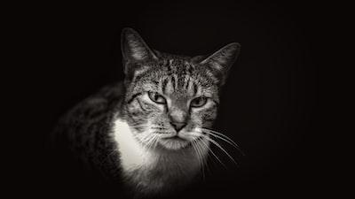 3389. Állatok