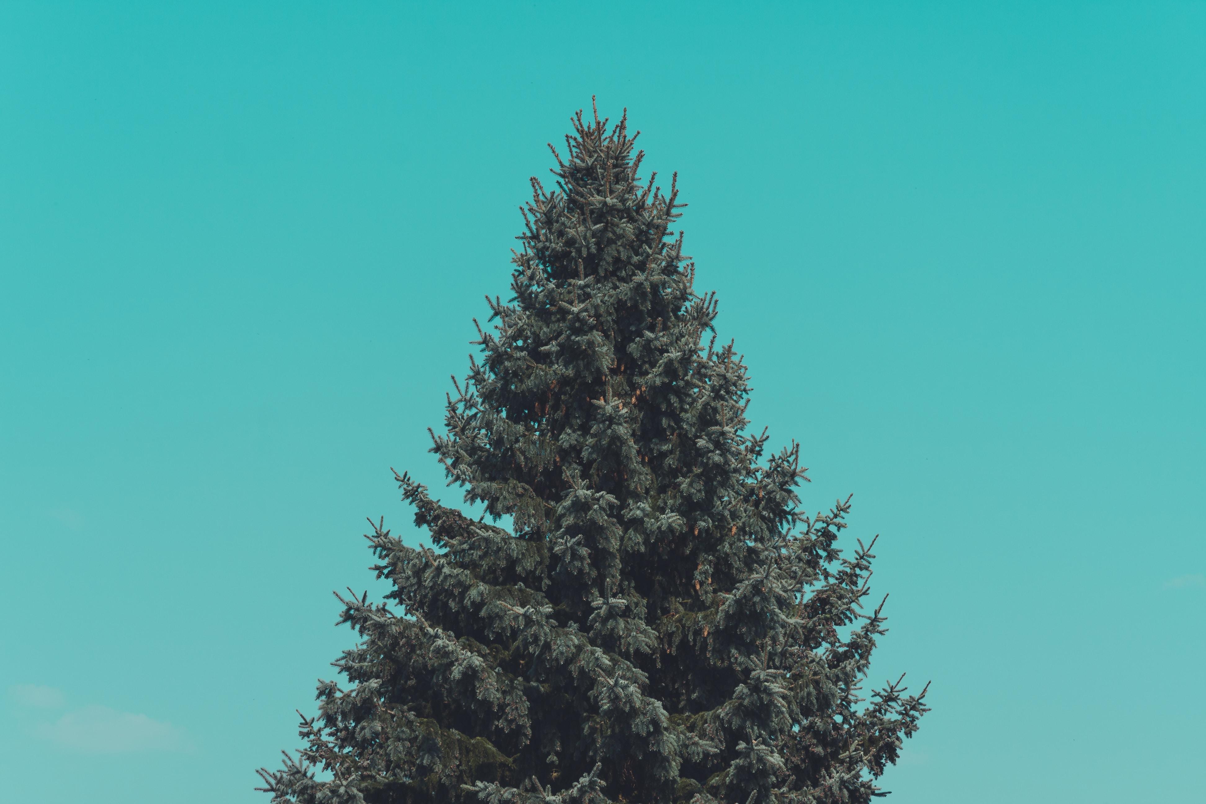 Holiday Home Christmas Tree