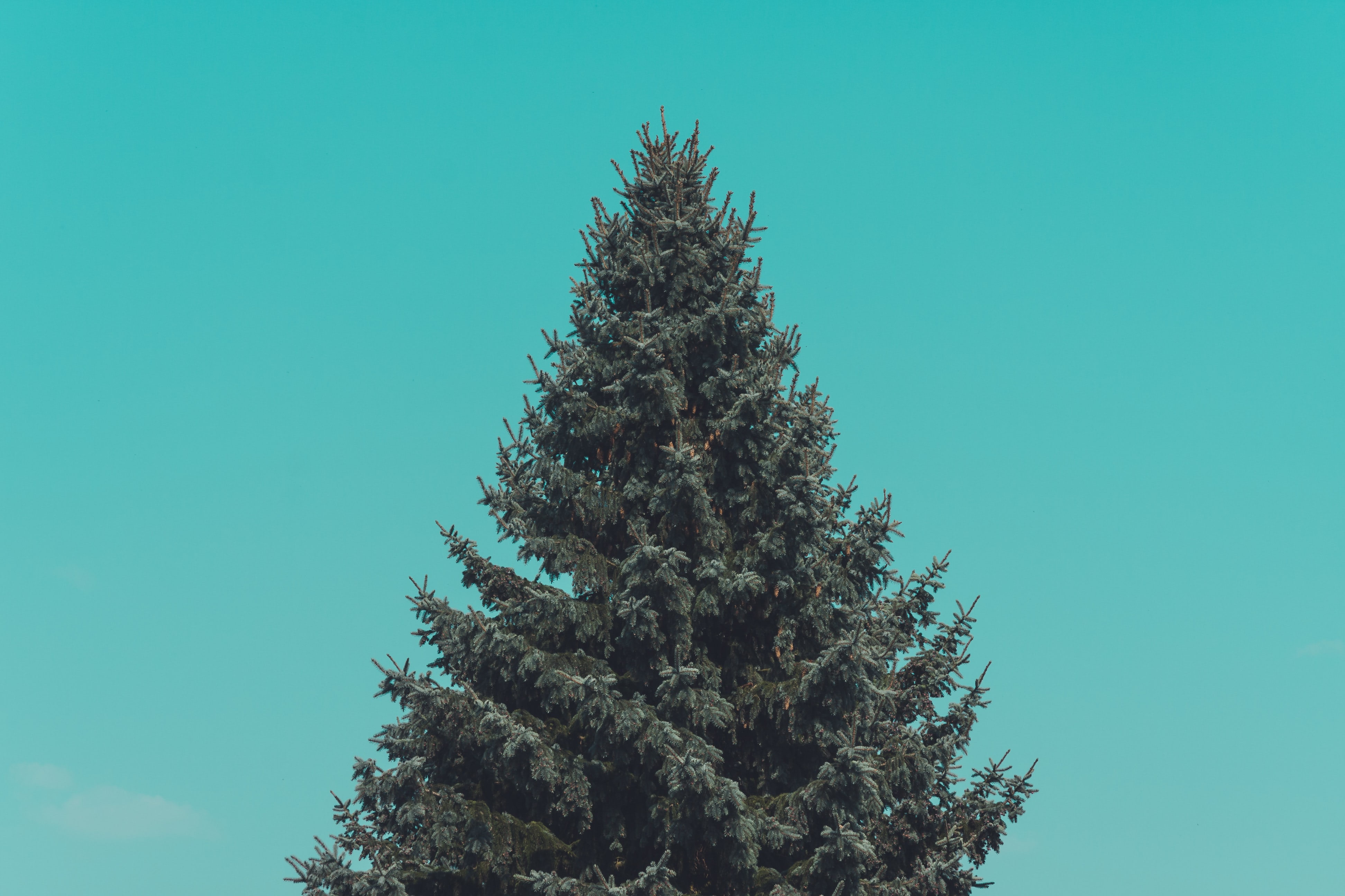 green pine tree under green sky