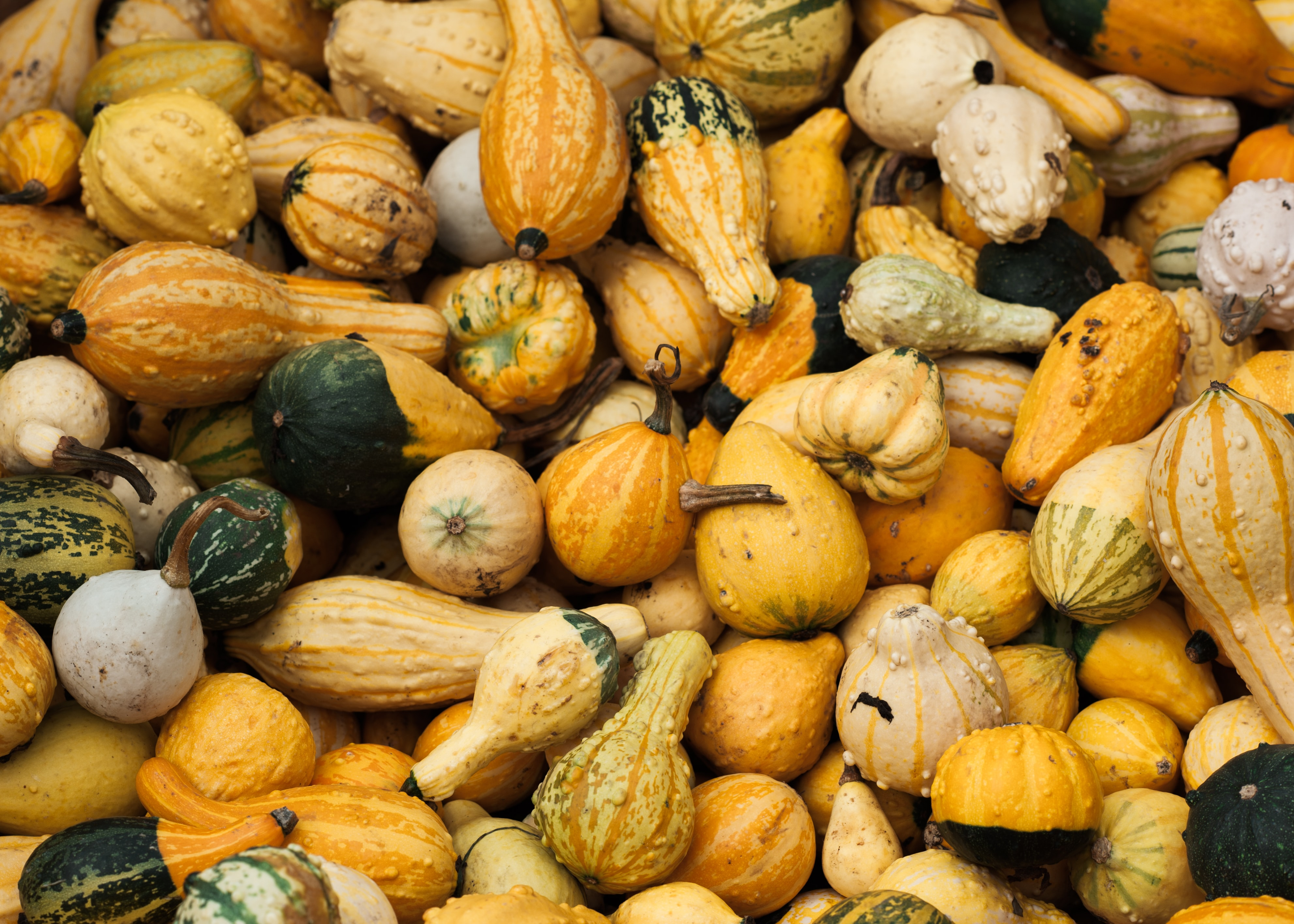 assorted-color gourds