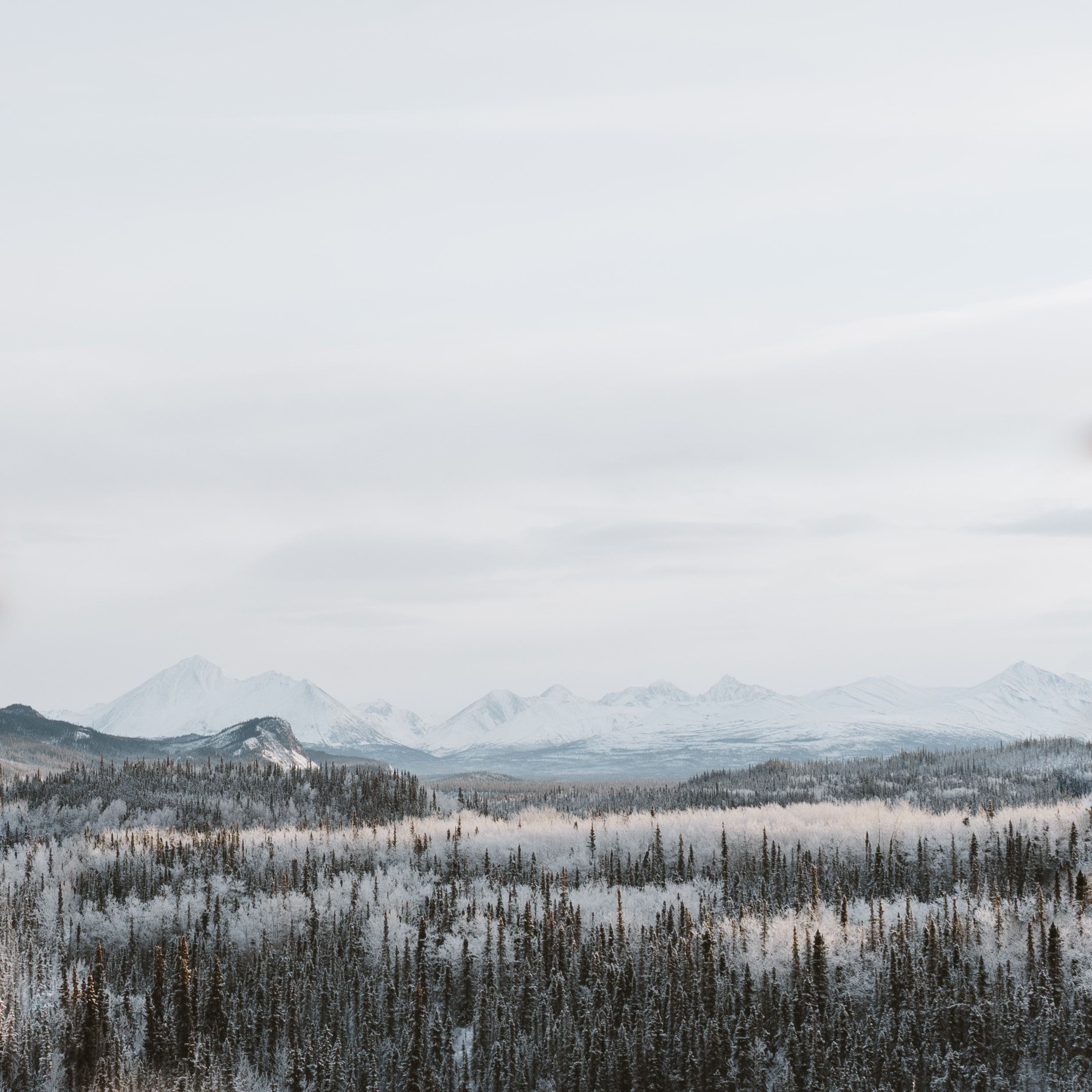 A cloudy sky above a snowy evergreen forest with mountains barely visible at the horizon