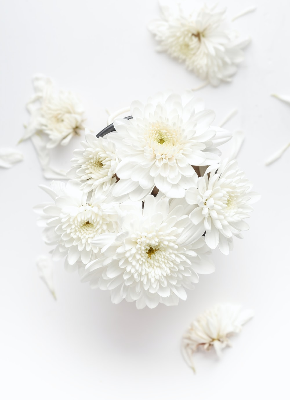 A top view of white dahlias on a white surface