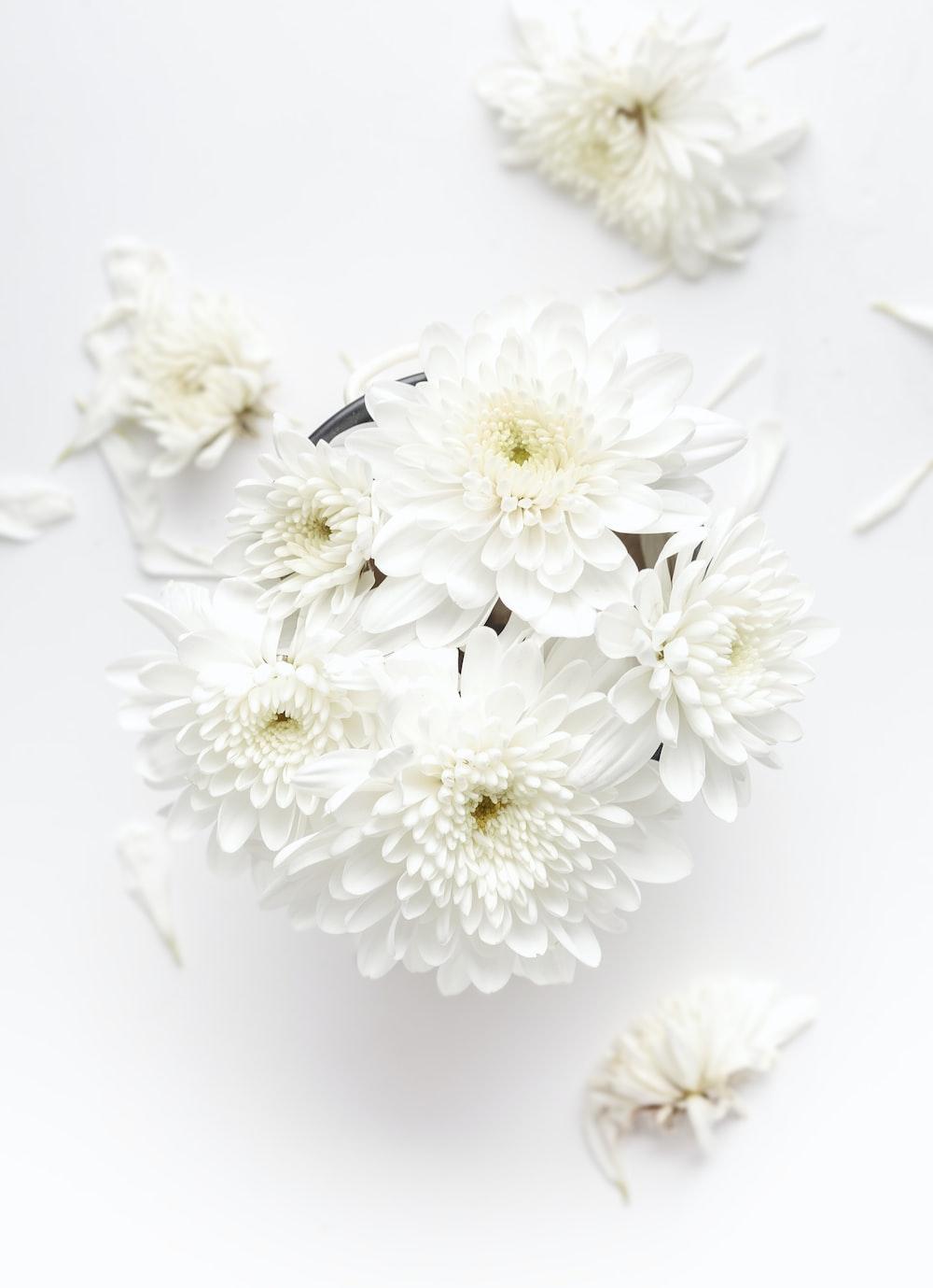 white petaled flower on white background