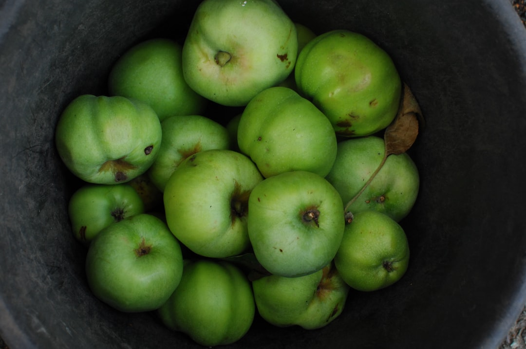 This bucket of apples was discovered whilst on a treasure hunt.  There was a handwritten note telling passers-by to help themselves and that the apple-tree owner hoped that whatever they got baked into (a crumble, a pie) was delicious.