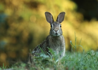 selective focus photography of brown rabbit