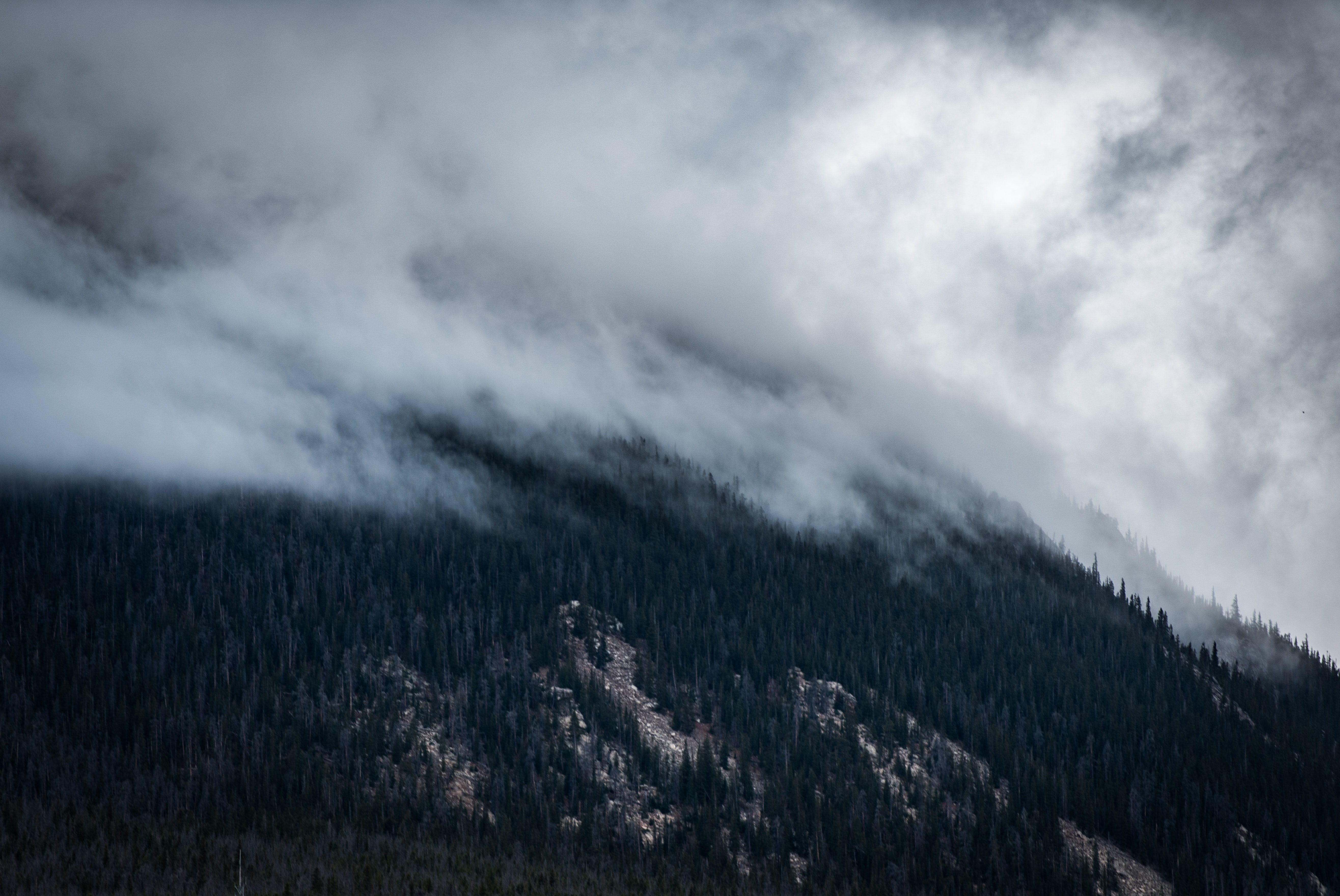 Mist coming down a wooded slope in Silverthorne