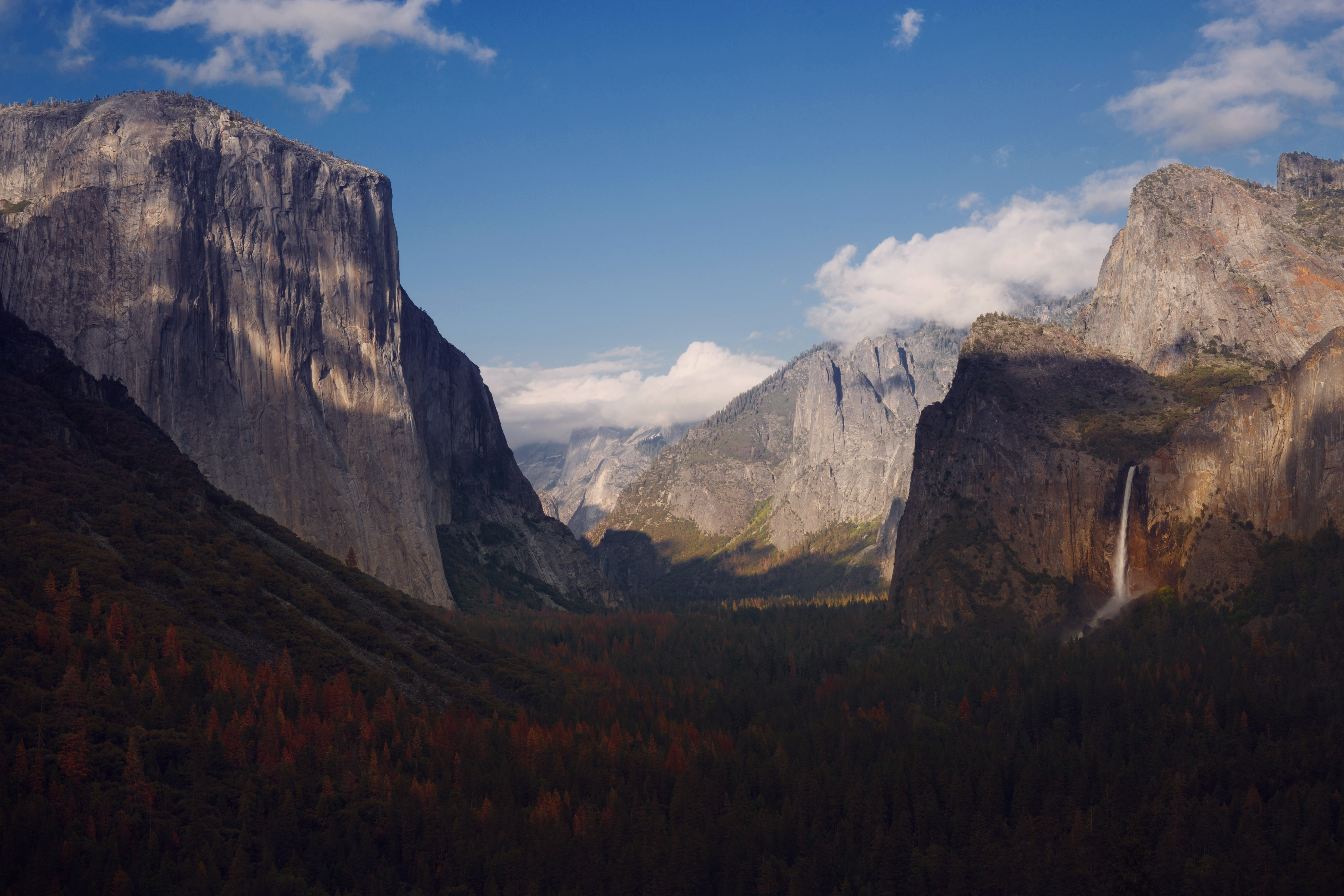 Long shadows on the wooded floor of Yosemite Valley