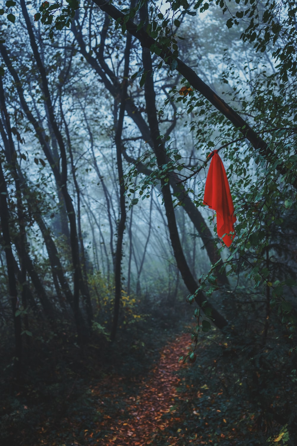 A red blanket hanging from a tree in a forest.