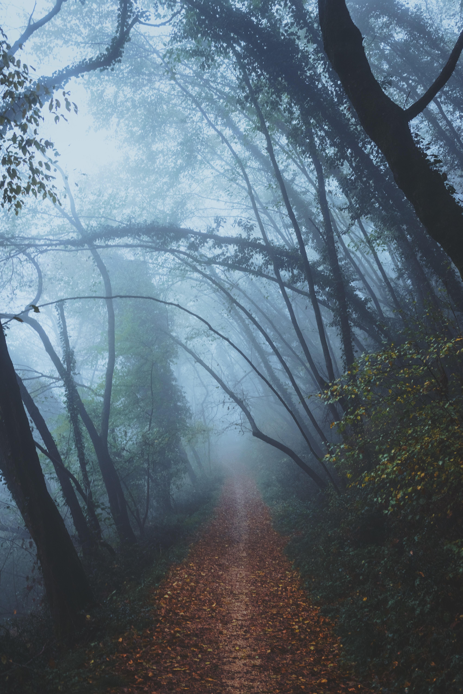 A leaf-covered path through a foggy forest
