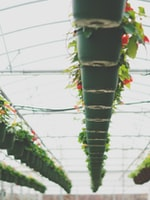 Tips for Winter Indoor Gardening