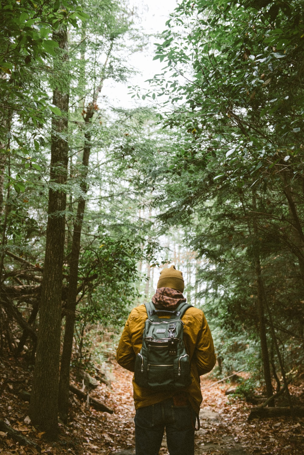 person with backpack walking through woods