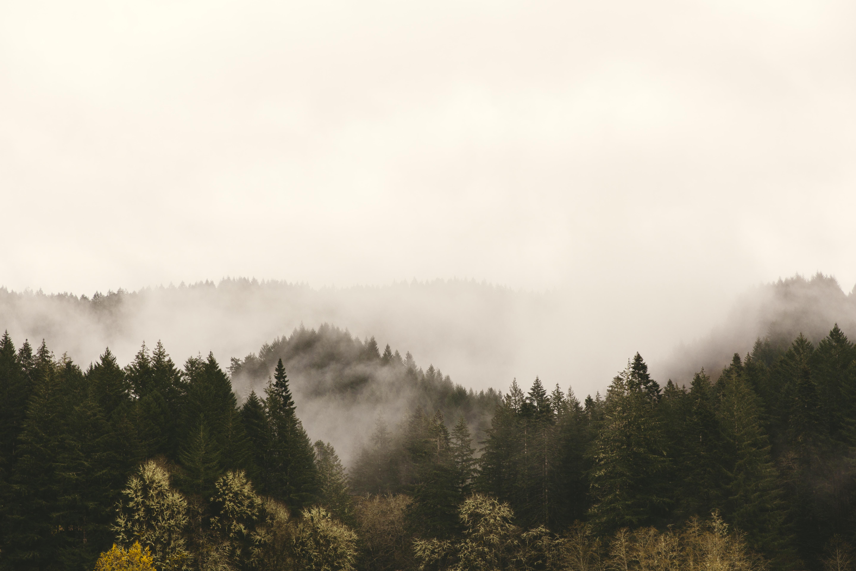 Mist over dark green woods in Roseburg