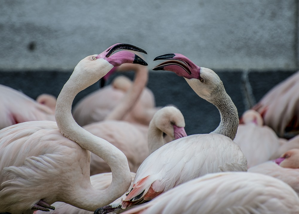 crowd of flamingo during daytime
