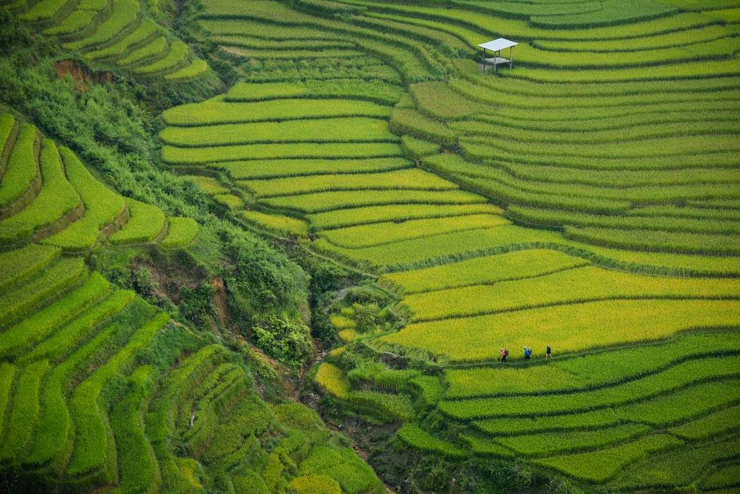 Lush greenery Vietnam