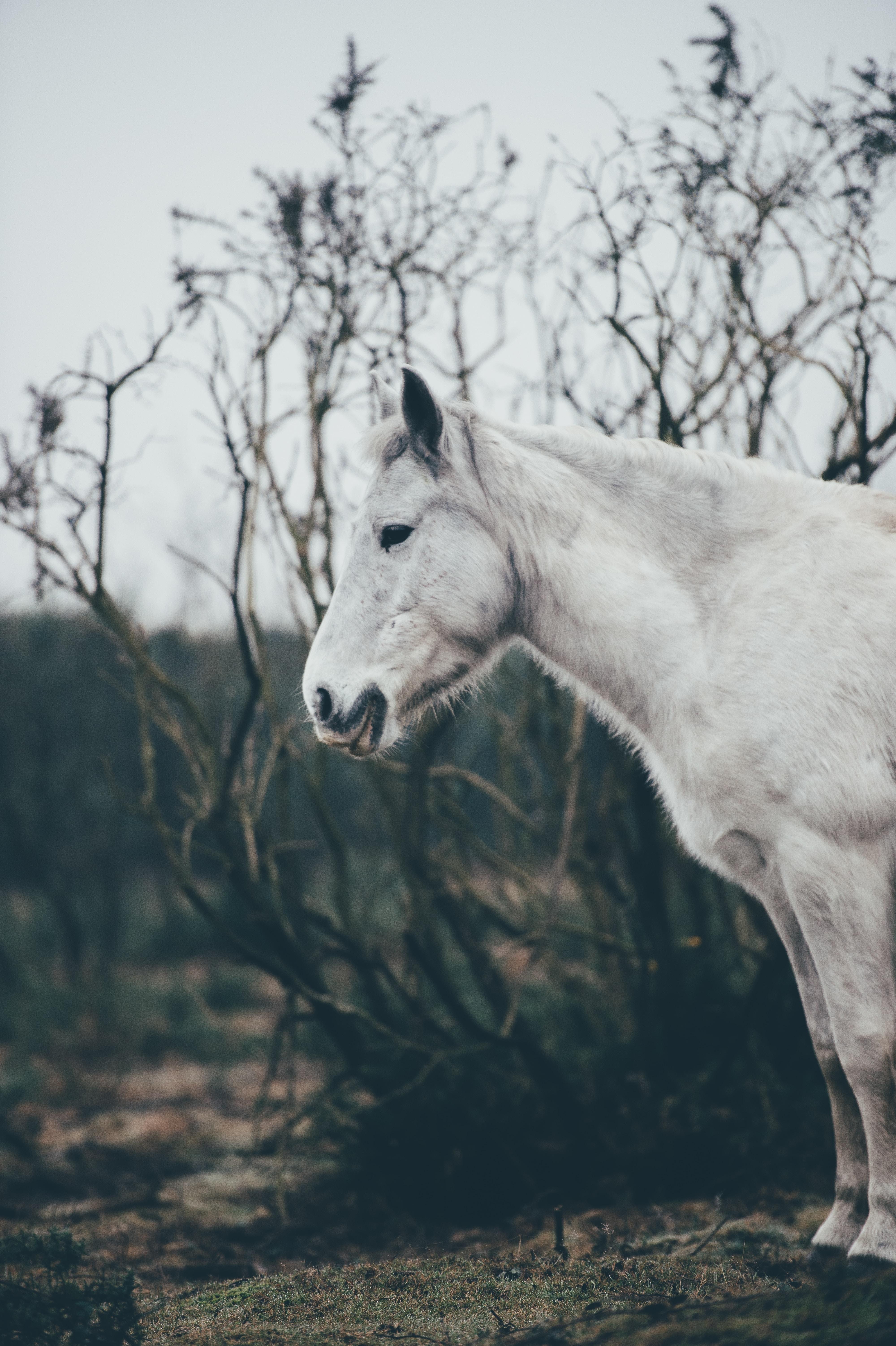 A white animal.