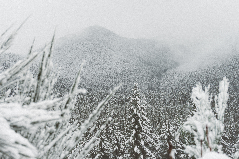 trees surround with snow