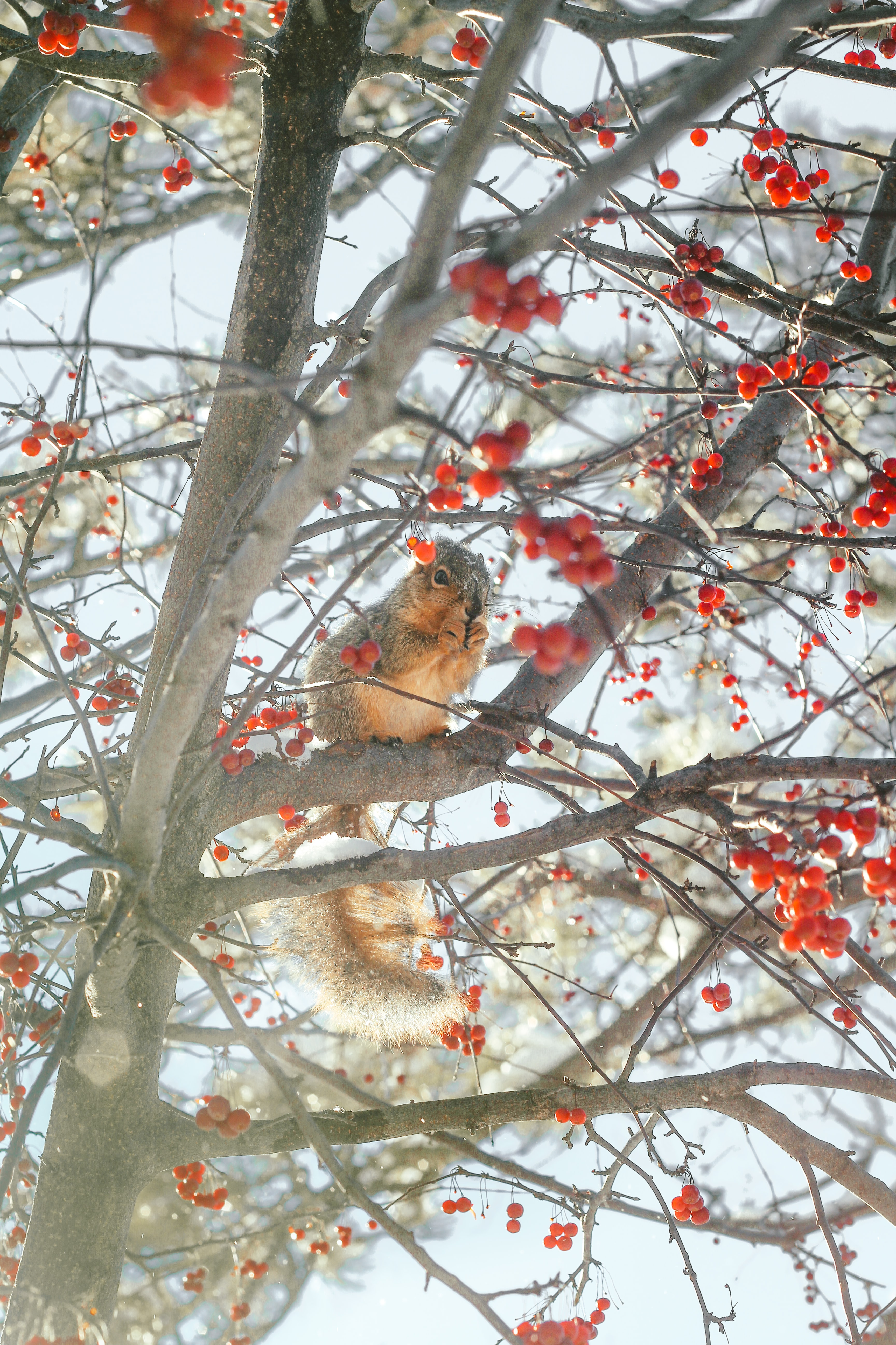 squirrel on tree branch during day
