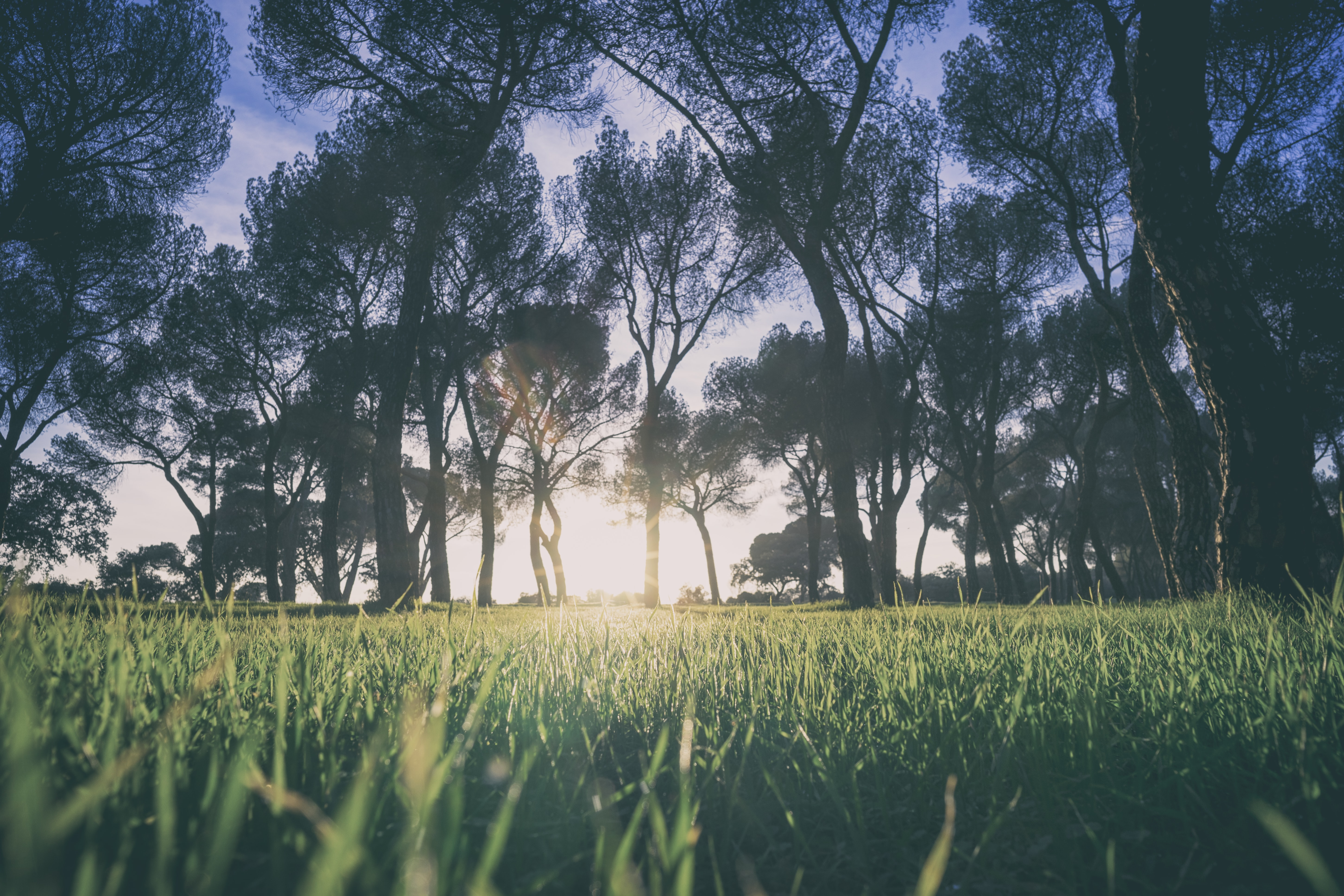 low angle photo of green grasses under trees at golden hour