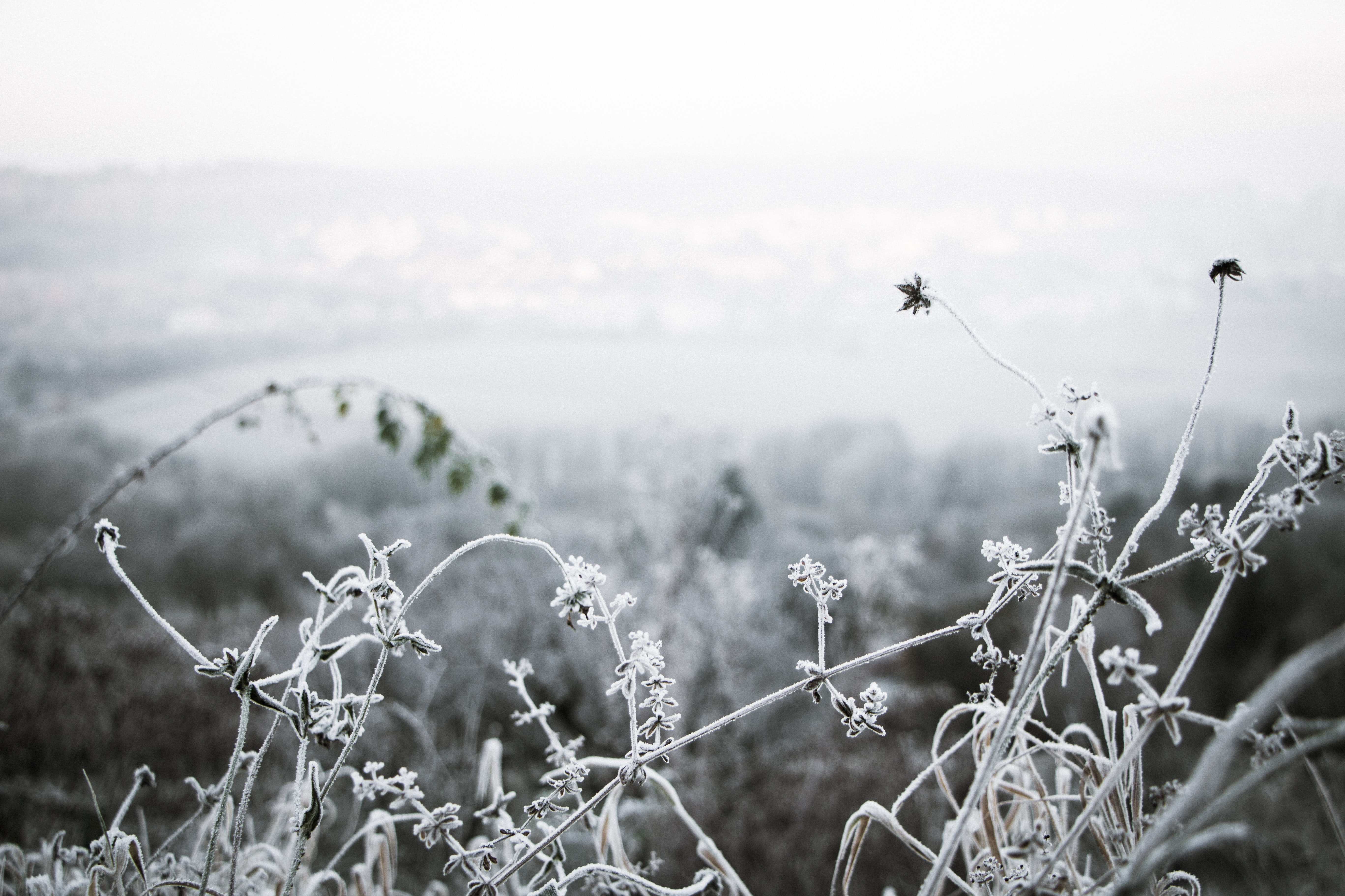 Frost-covered plants curl and twist in the foreground while a white snowscape is visible in the distance