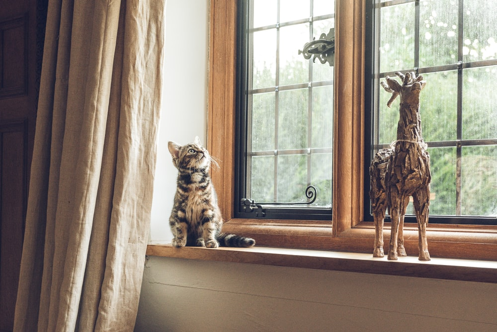 gray tabby cat near window
