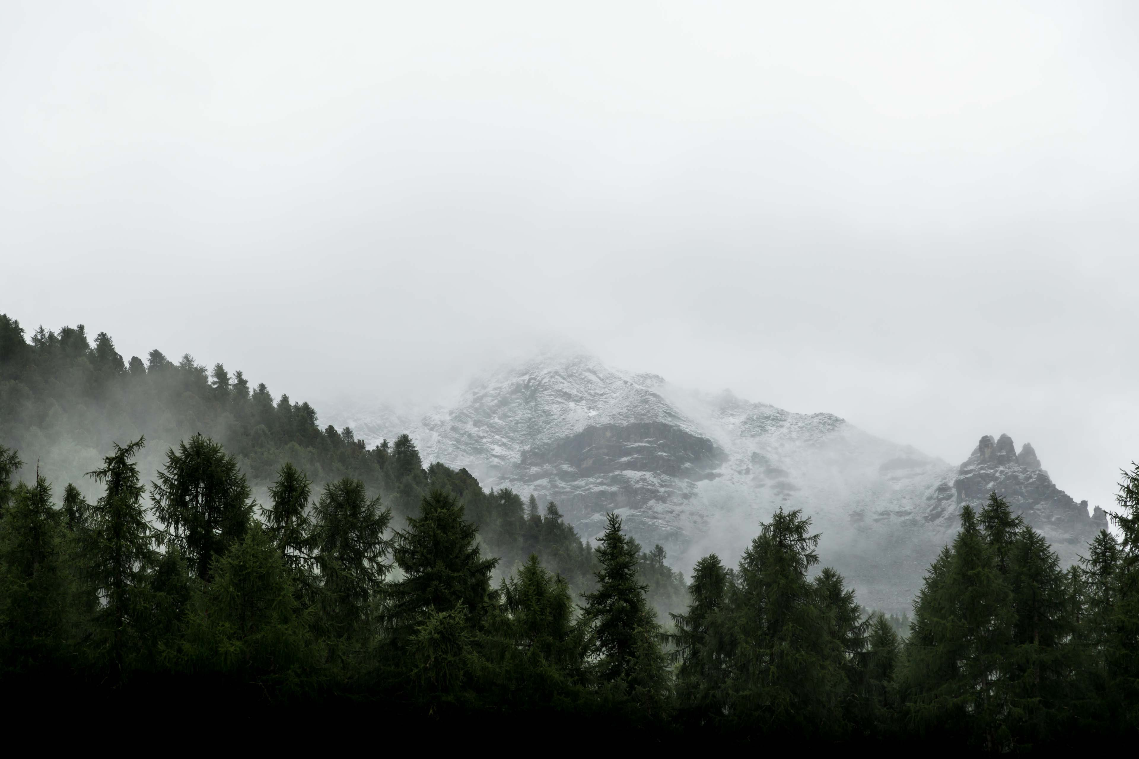 Mist covering the snowy peaks and trees near the mountain village of Pontresina, Grisons, Switzerland