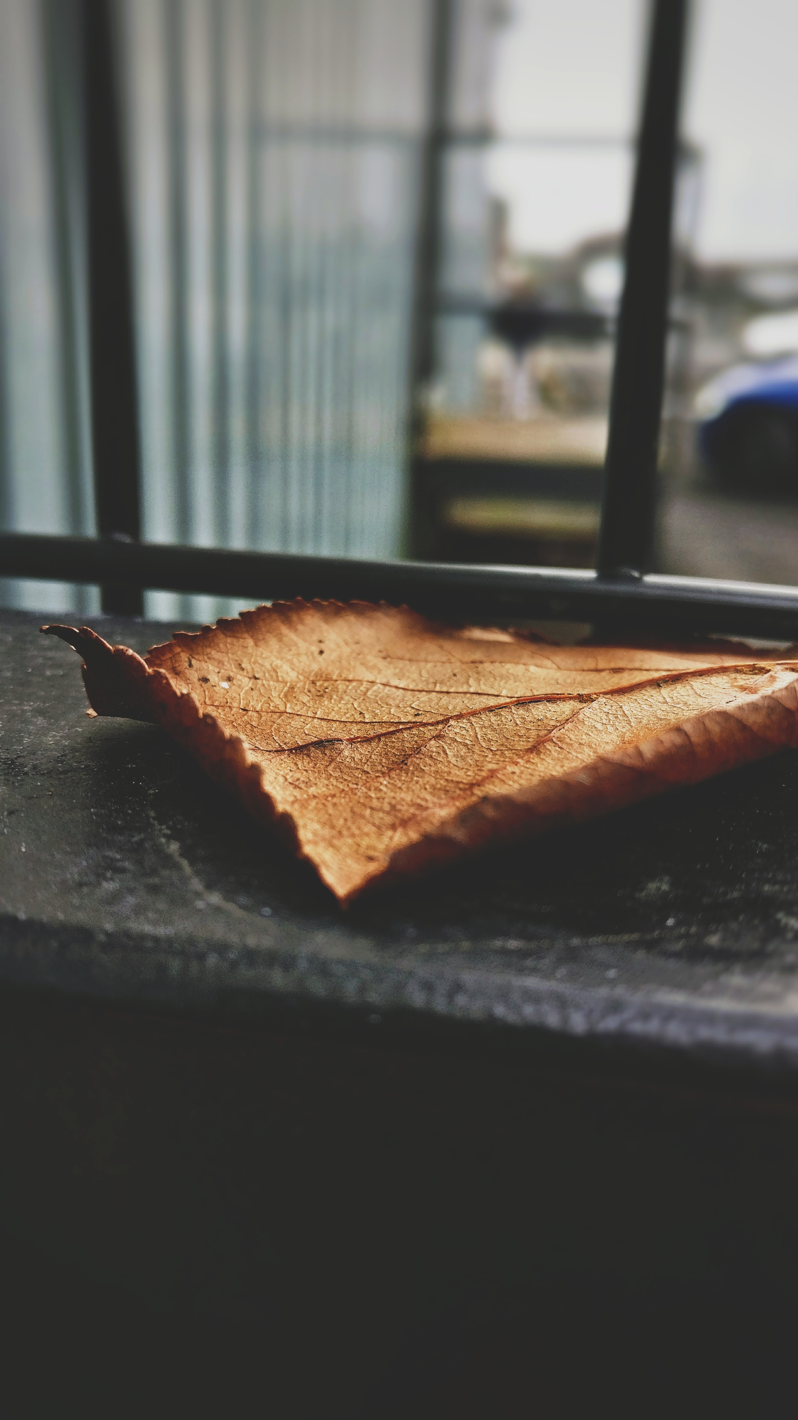 A large leaf sitting at the bottom of a window.