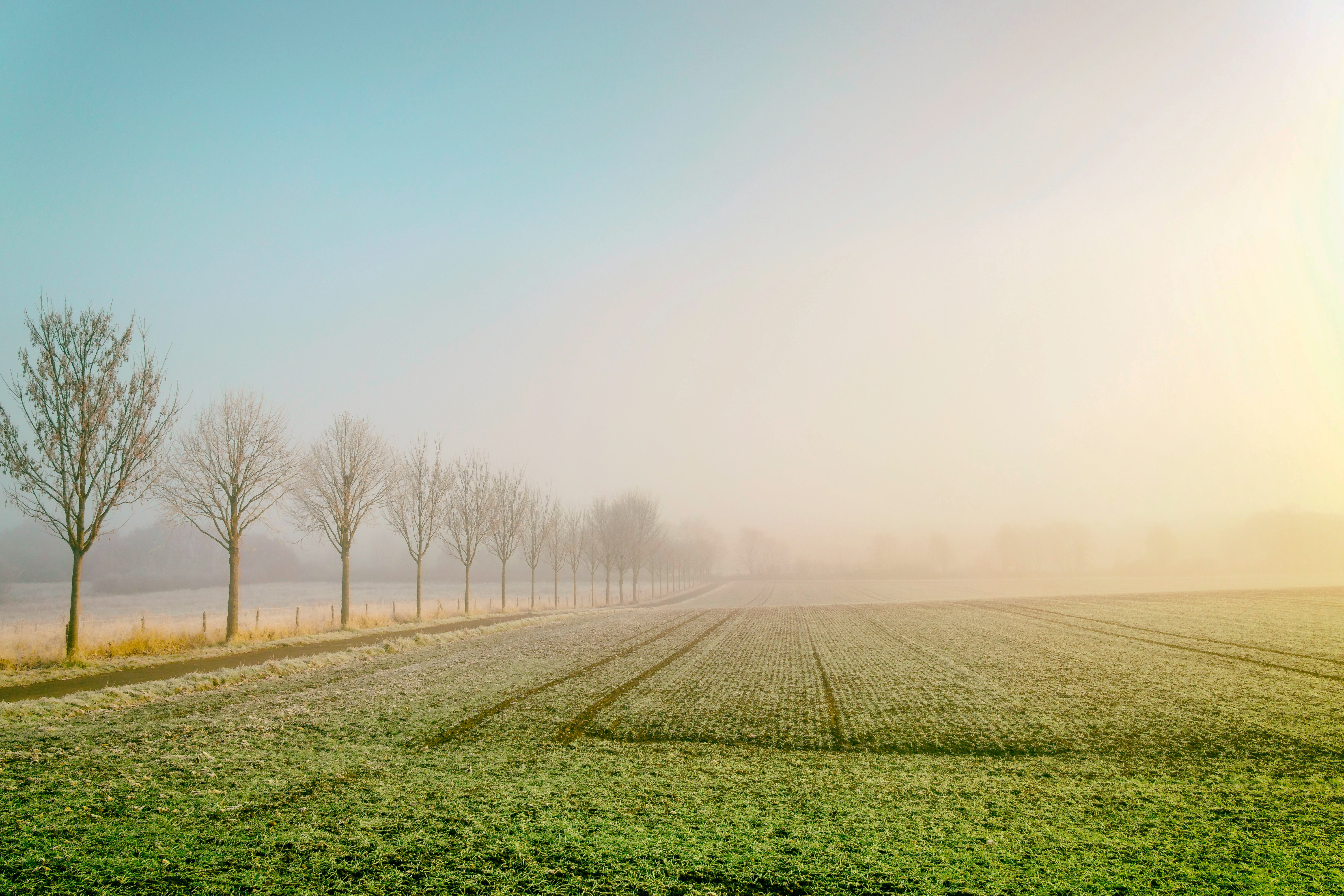 Bright and sunny farmfield in Entenfang