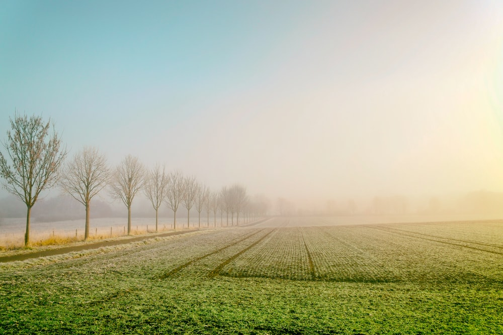 landscape photography of field