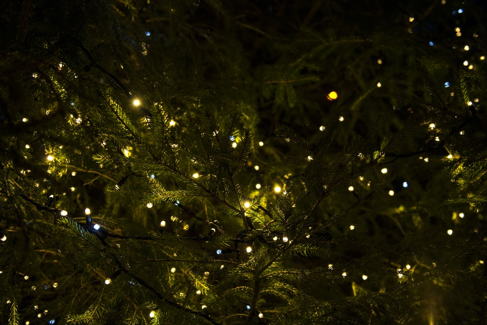 green tree with yellow lights