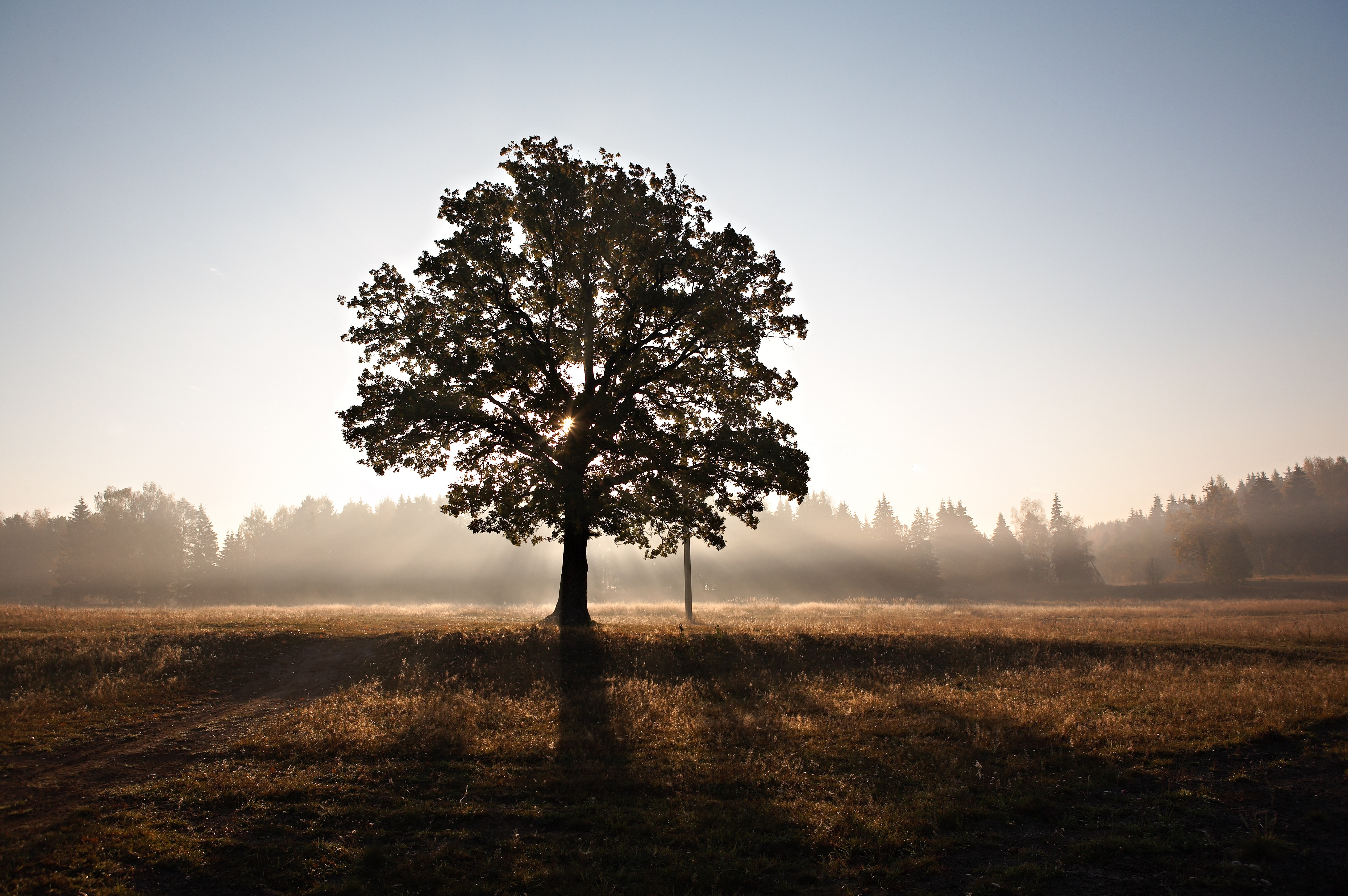 A single tree in the middle of a field during sunrise